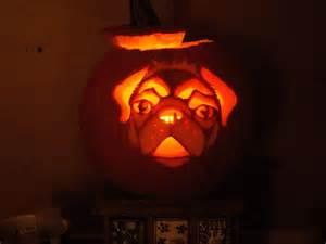 pug pumpkin carving halloween pinterest