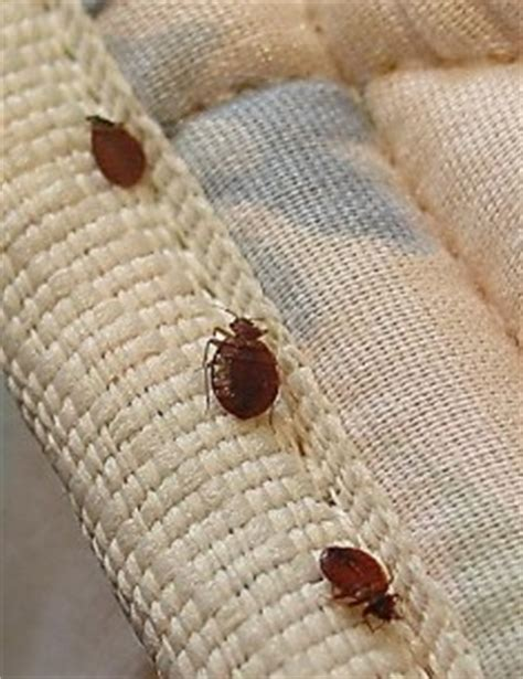 how quickly do bed bugs spread bed bug faq bed bug laundry service