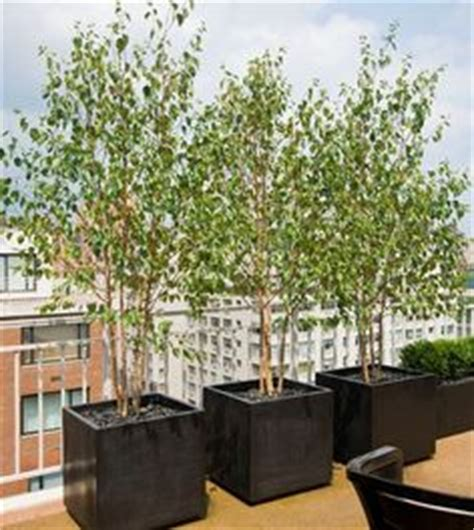 Large Planters For Trees Uk by 1000 Images About Spectacular Rooftop Terraces Designed