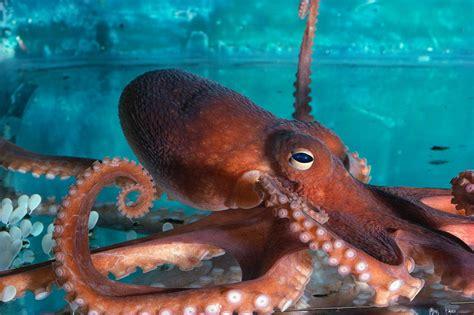 octopus l octopus healthy soul