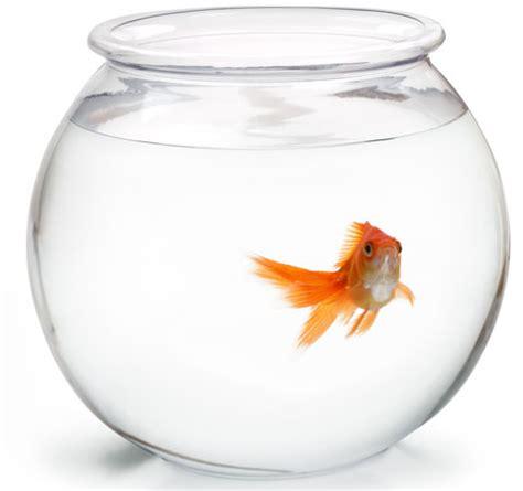 vasca pesce rosso mini guida al neofita per il passaggio dalla boccia all