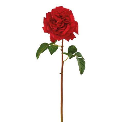 fiore la rosa fiore rosa regia adriani e