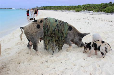 bay of pugs bay of pigs pictures posters news and on your pursuit hobbies