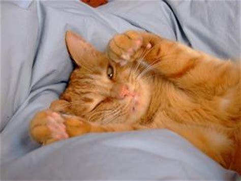chats avec d 233 mangeaisons oreilles condexatedenbay