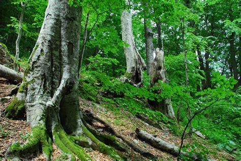 regionale europea la spezia formazione operatori forestali liguria capofila di un