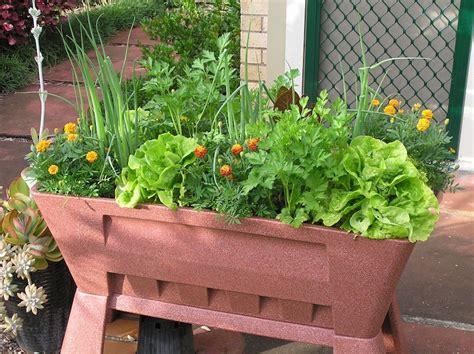 top  vegetables  grow  pots gardendrum