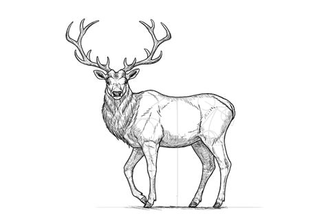 how to a deer how to draw a deer step by step