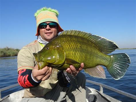 1000 images about fly fishing 1000 images about fishing zambia on gilbert o
