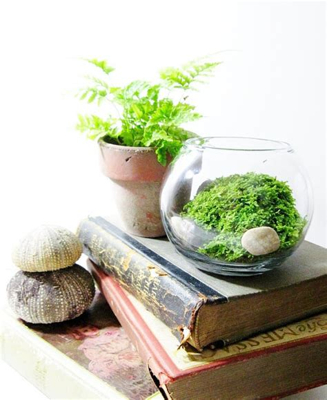 desk garden live plant office terrarium mini indoor desk garden glass