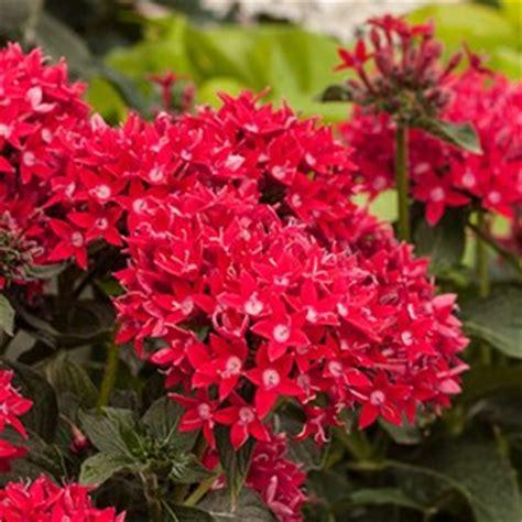 Garden Of Florist Venice Fl Flowers For Florida Color Border Costa Farms
