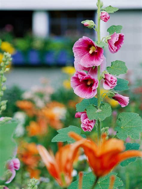 Die Schönsten Blumen 4899 by Die Sch 246 Nsten Rosa Blumen Im Garten Anbauen Gartengestaltung