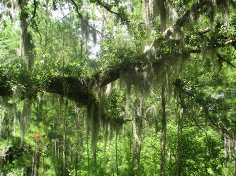 Pender County Records File Moss In Pender County Nc Img 4472 Jpg