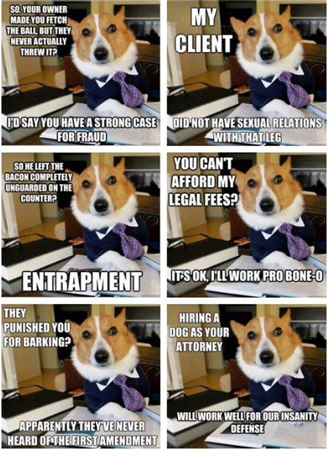 Corgi Lawyer Meme - my favorite corgi lawyer memes