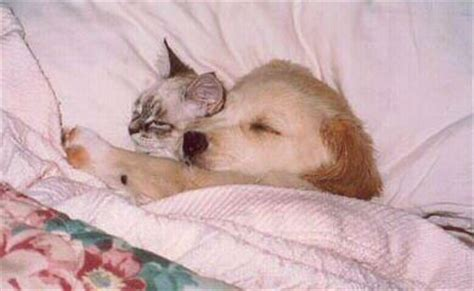 puppy and kitten cuddling cuddling and cat sleeping punjabigraphics