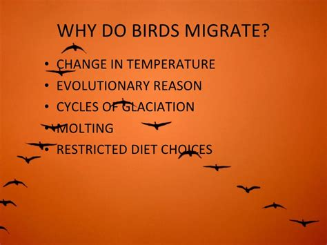 migratory birds check out migratory birds cntravel