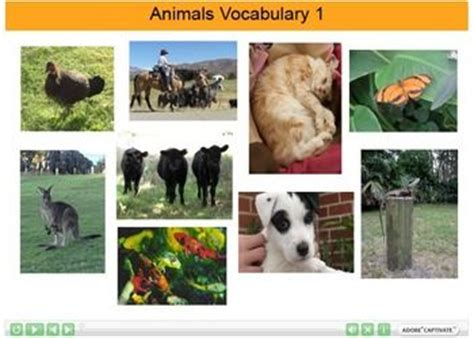 225 best ideas about animals vocabulary on
