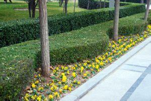 landscaping durham nc landscaping durham nc pleasant green grass