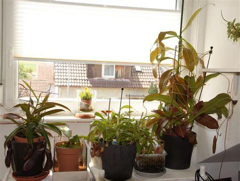 fensterbrett pflanzen pflanzen aus pflanzen und pflegen tulpen f r