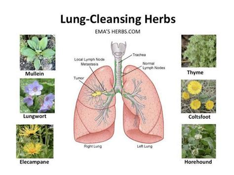 Human Detox System by The Respiratory System Is A Vital Part Of The Human