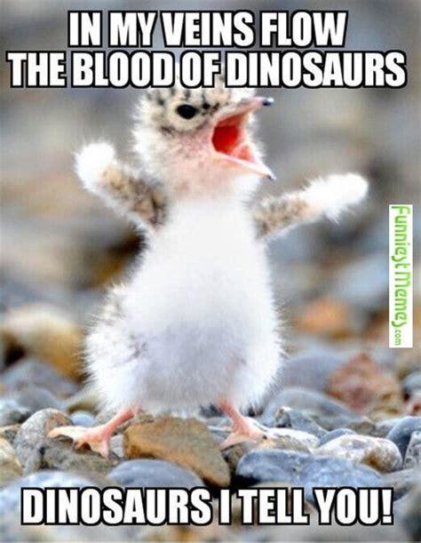 Ducks Meme - best 25 duck memes ideas only on pinterest