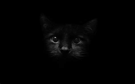 cat wallpaper facebook black cat facebook cover walldevil