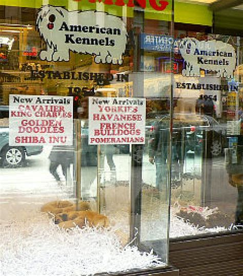 Pet Sale Avenue Is Looking For by Volunteers Taking Stand Against Bad Canine Breeders Ny