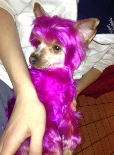 hair dye for dogs pin by opawz on opawz pet grooming products