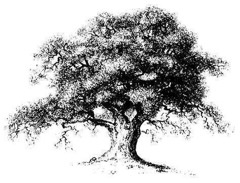line drawings trees oak tree drawings free unique free clipart line drawing