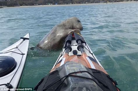 ellen boat dog bed video shows dorset seal pup trying to hitch a lift on sea