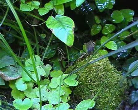 Ou Trouver De La Mousse Pour Terrarium by Mousse Pour Terrarium Beautiful Fabrication D Un