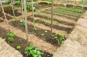 rotation des cultures au potager jardinage