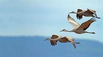 Backyard Bird Count Birds Audubon