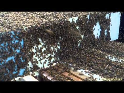backyardhive new dvd alternative beekeeping using the top best 25 world records ideas on guinness book