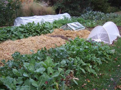 Vegetable Garden In Winter Protective Devices For Fall And Winter Vegetable Gardens