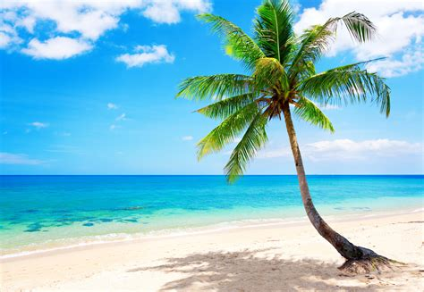 tropical wall tropical wallpapers pictures images