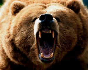 Top 10 Bars In Boston The Bear Facts Co Habitation With Bears In Alaska