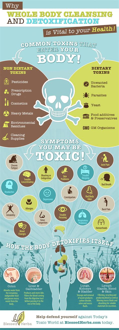 Chemical Detox Symptoms by Infographic Why Whole Cleansing And Detoxification