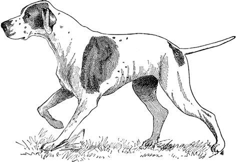 puppy illustration illustration vintage images