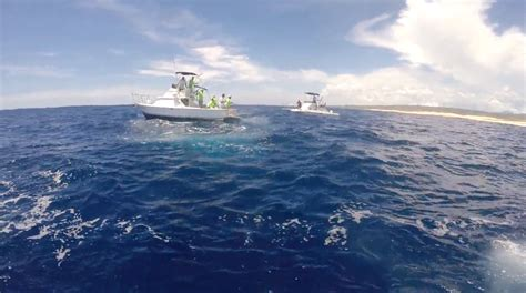 fast moving boats fast moving marlin tries jumping onto fishing boat