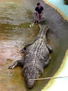 world s world s largest crocodile in captivity dies in philippines