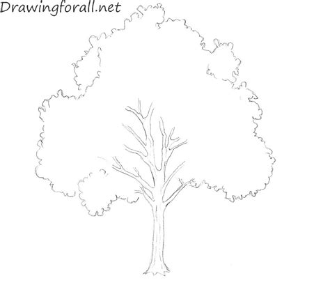 how to draw a doodle tree how to draw a tree for beginners drawingforall net