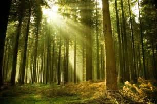 differenza tra bosco e foresta