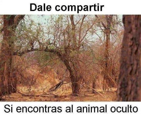 imagenes de encontrar animales ocultos encuentra el animal oculto juegos e ingenio 54303