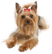 how to make bows for yorkies 48 best images about crafts fall on