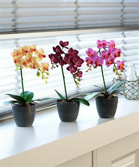 Farbe Orchidee by Tipps Zur Orchidee Pflege Wie 252 Berdauert Die Orchidee