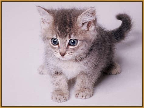 imagenes tiernas gatitos bebes gatitos y perritos muy tiernos archivos gatitos tiernos