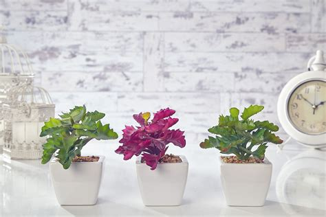 green and purple home decor artificial cactus flowers plants in pot home decor garden