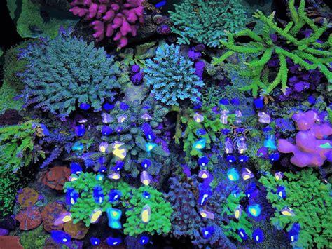 beleuchtung aquarium aquarium led beleuchtung fotos beste reef aquarium led