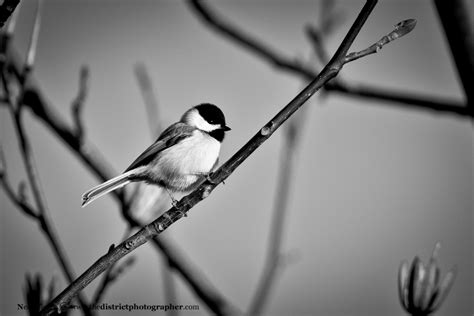 photo of tweety bird in black and white birds the