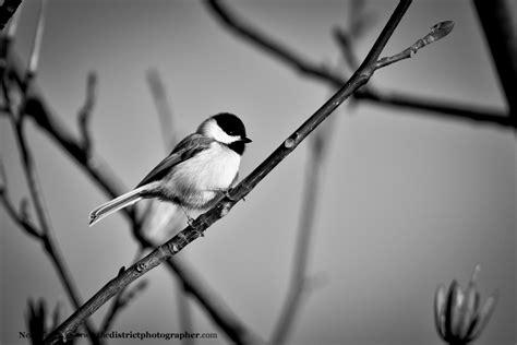 White Bird Black Bird photo of tweety bird in black and white birds the